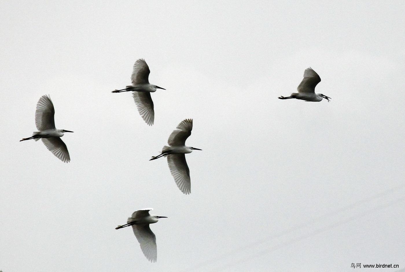 动物 鸟 鸟类 1400
