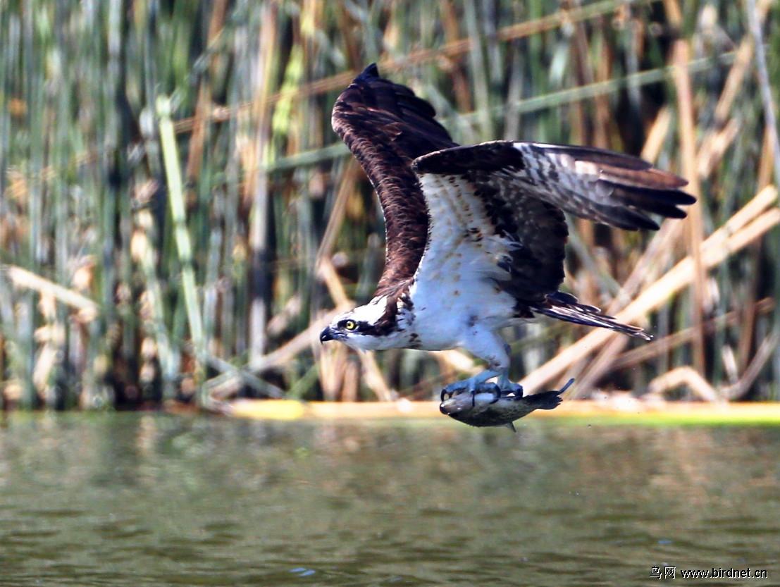 动物 鸟 鸟类 1107