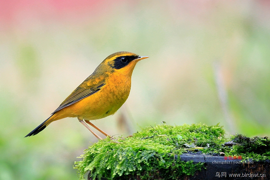 鸟儿迁徙客栈笔记