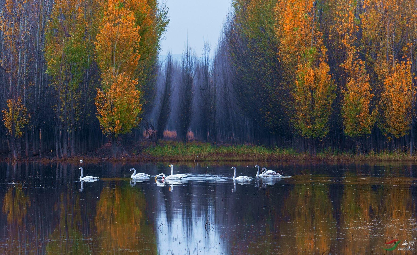 1024黄河湿地动物生态风景精彩摄影图片