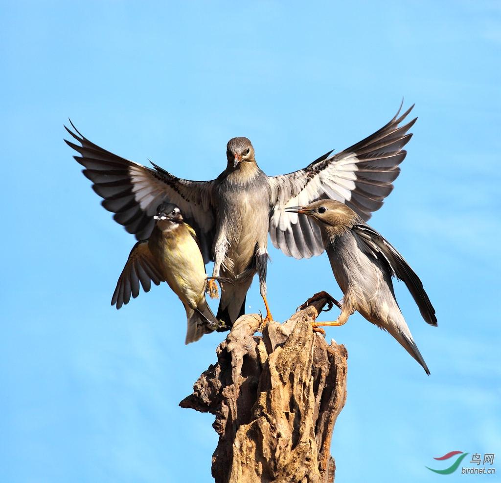 丝光术鸟-江西版Jiangxi鸟网直播丽视频丽图片