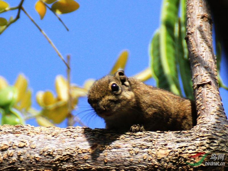 青椒树上的动物名