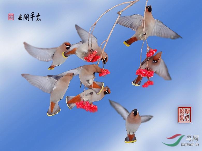 太平/祝鸟网红火 祝鸟友春节快乐