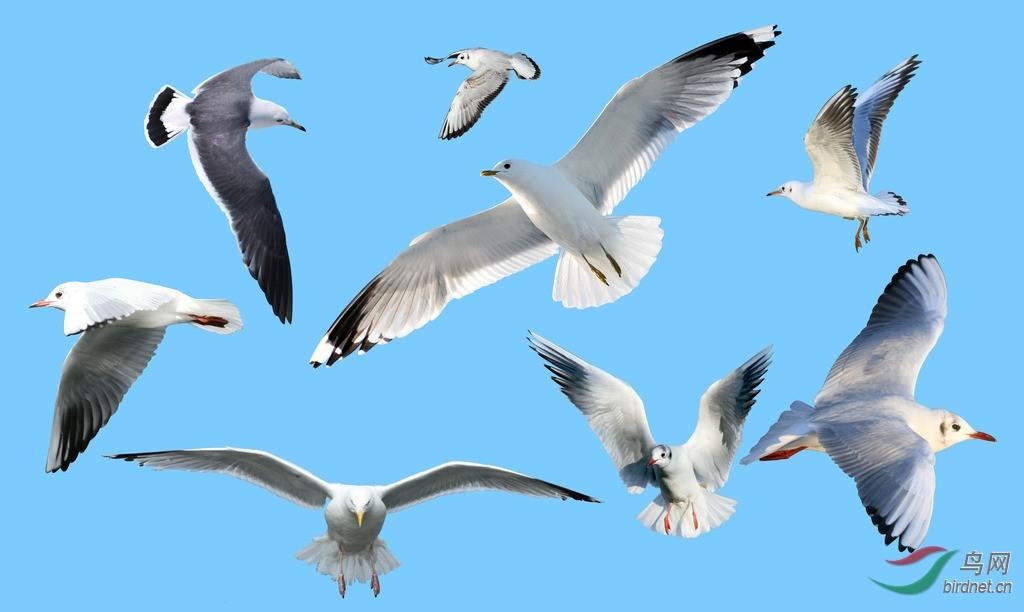 海鸥画法步骤图片