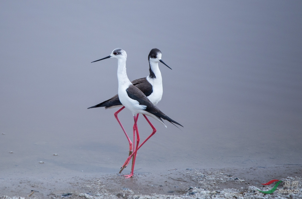 壁纸 动物 鸟 鸟类 摄影 桌面 1024_674