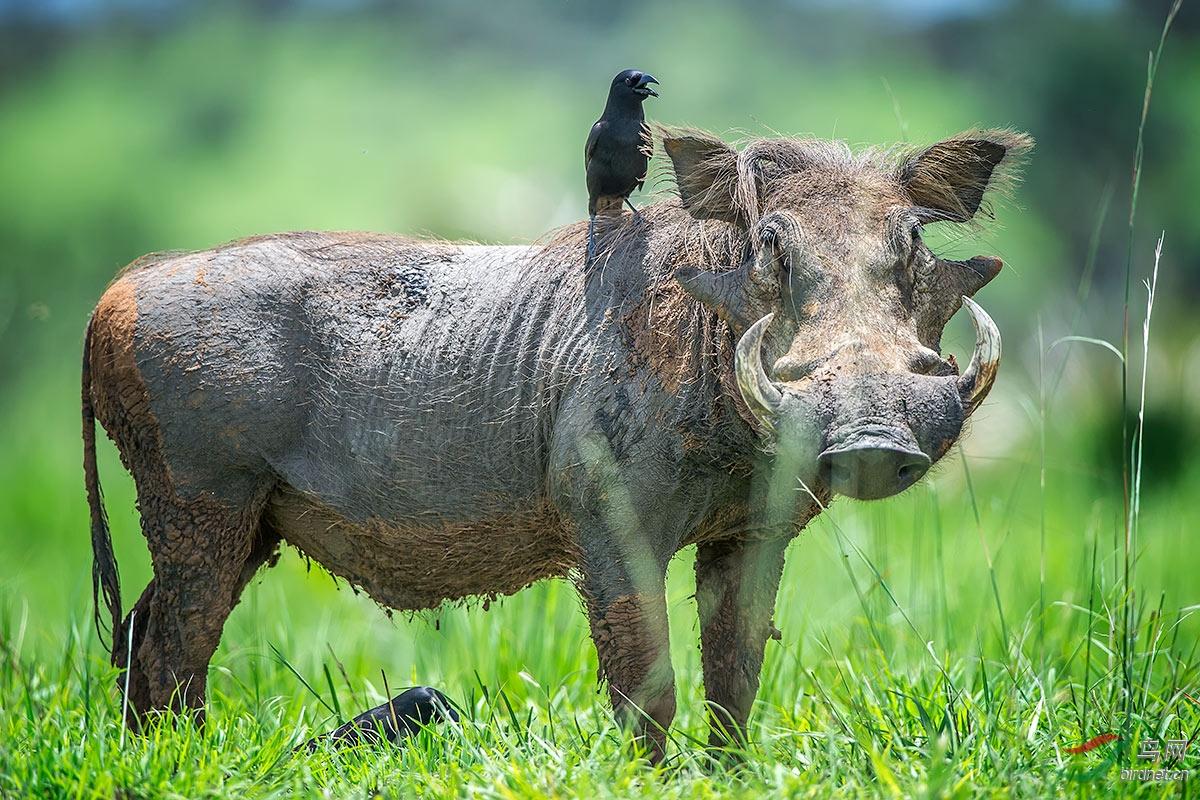 一些珍稀及常见的动物