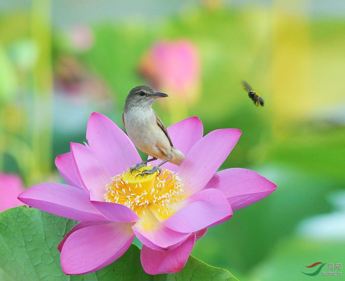 一枝花 Hebei