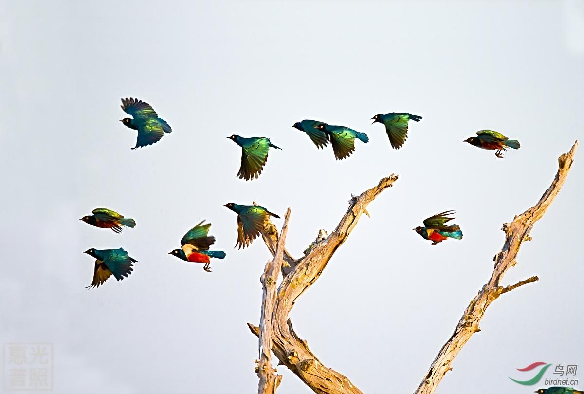 春天小鸟成群的图片