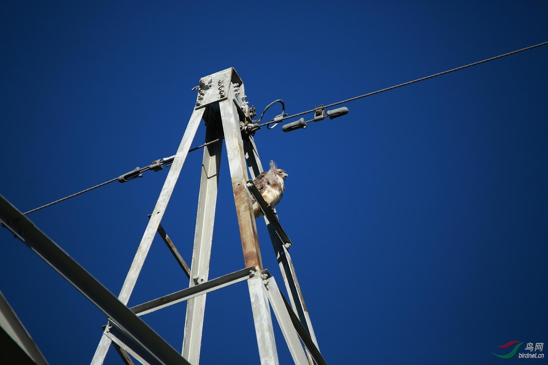 高压线塔高度为