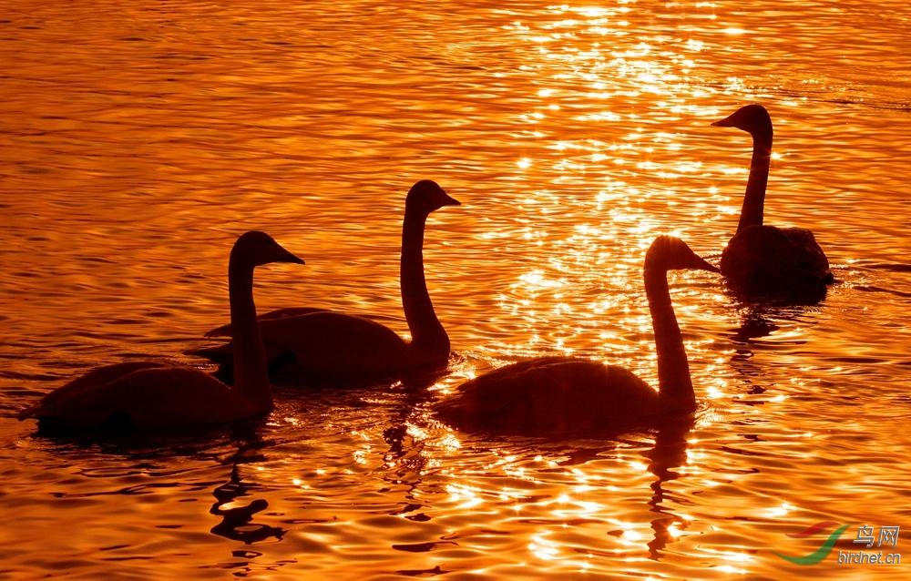 http://pic.birdnet.cn/forum/201501/11/204223k6tsh0n1jhh0j10k.jpg