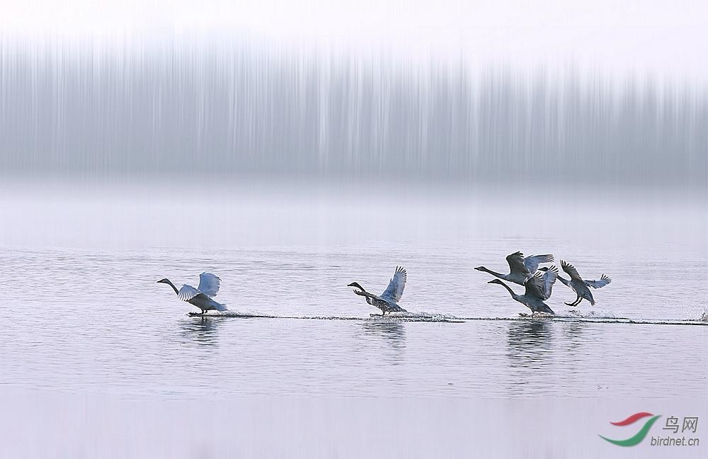 http://pic.birdnet.cn/forum/201501/11/204225huqzsscfslcucy7t.jpg