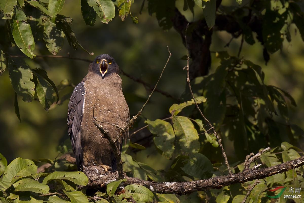 啄木鸟大片在线