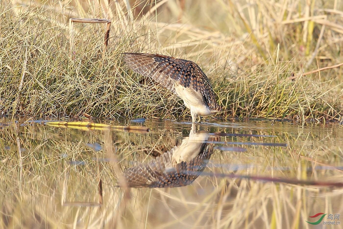 龙虾蛇蒿糊
