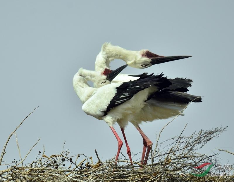 黑龙江林甸野生动物保护站鸟况