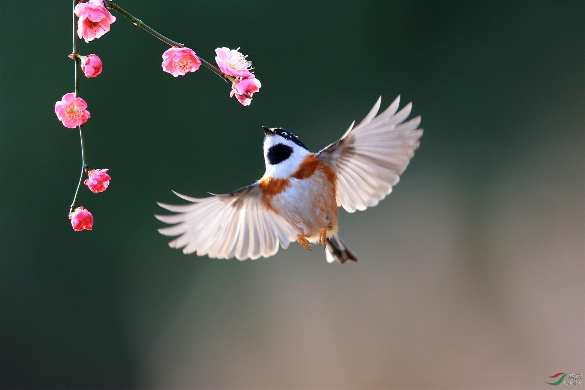 四川春天的动物