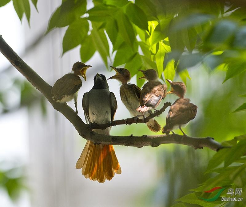 父亲树林和鸟