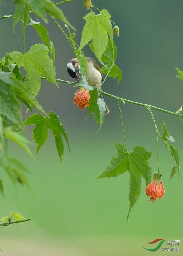 动物 花 鸟 鸟类