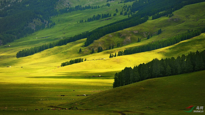 著名的自然生态风景区如白哈巴