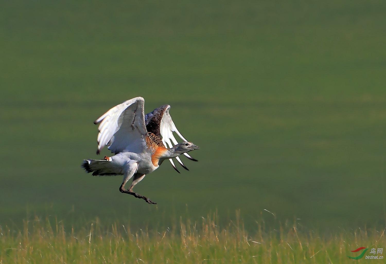 喜鹊是几级保护动物