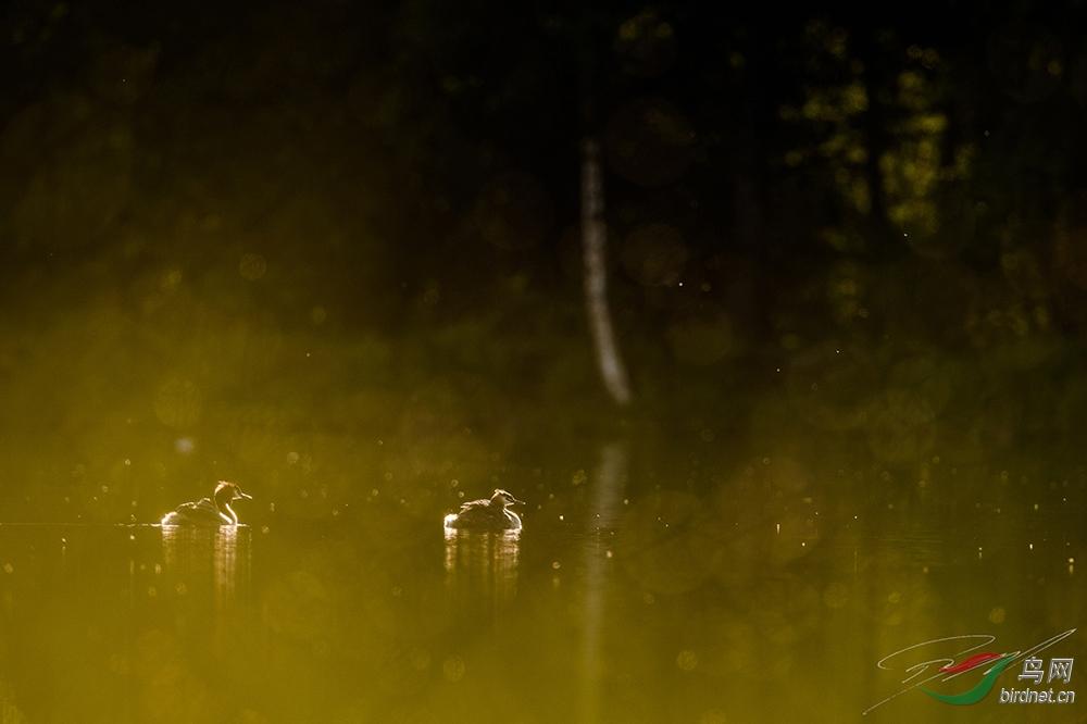 Nikon-AF-S-Nikkor-500mm-f4E-FL-ED-VR-lens-field-test-4.jpg