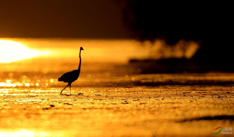 夕阳无限好 - 艺术创意版 鸟网