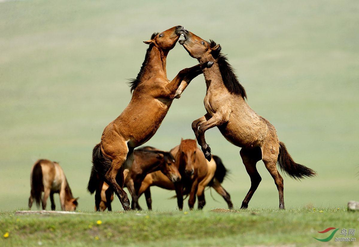 内蒙古大草原骑马