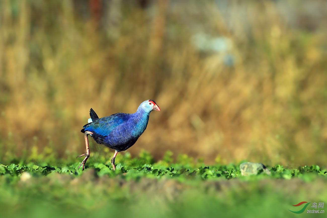 最美的已灭绝的动物