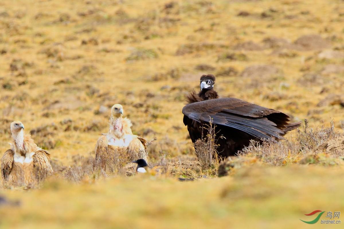 被列入国家重点保护野生动物名录