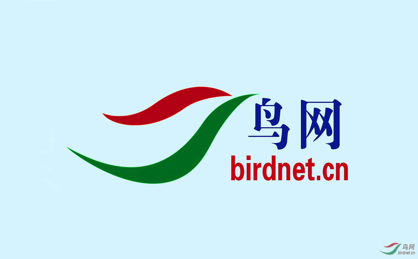 鸟网logo.png