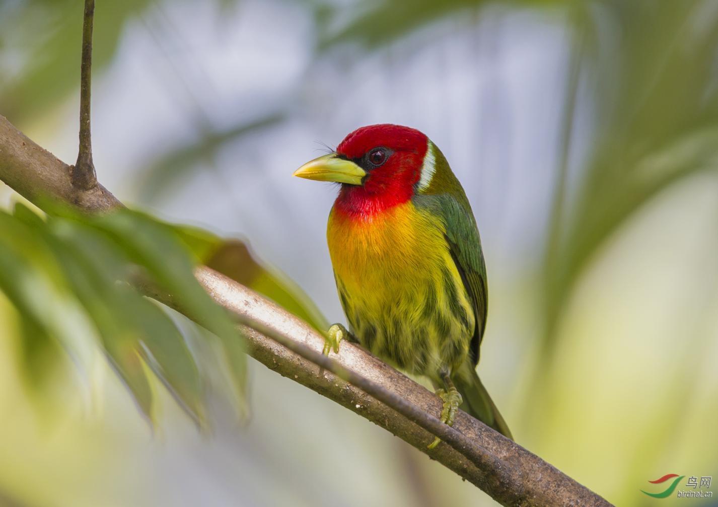 16天哥斯达黎加拍鸟团_页面_01_图像_0001.jpg