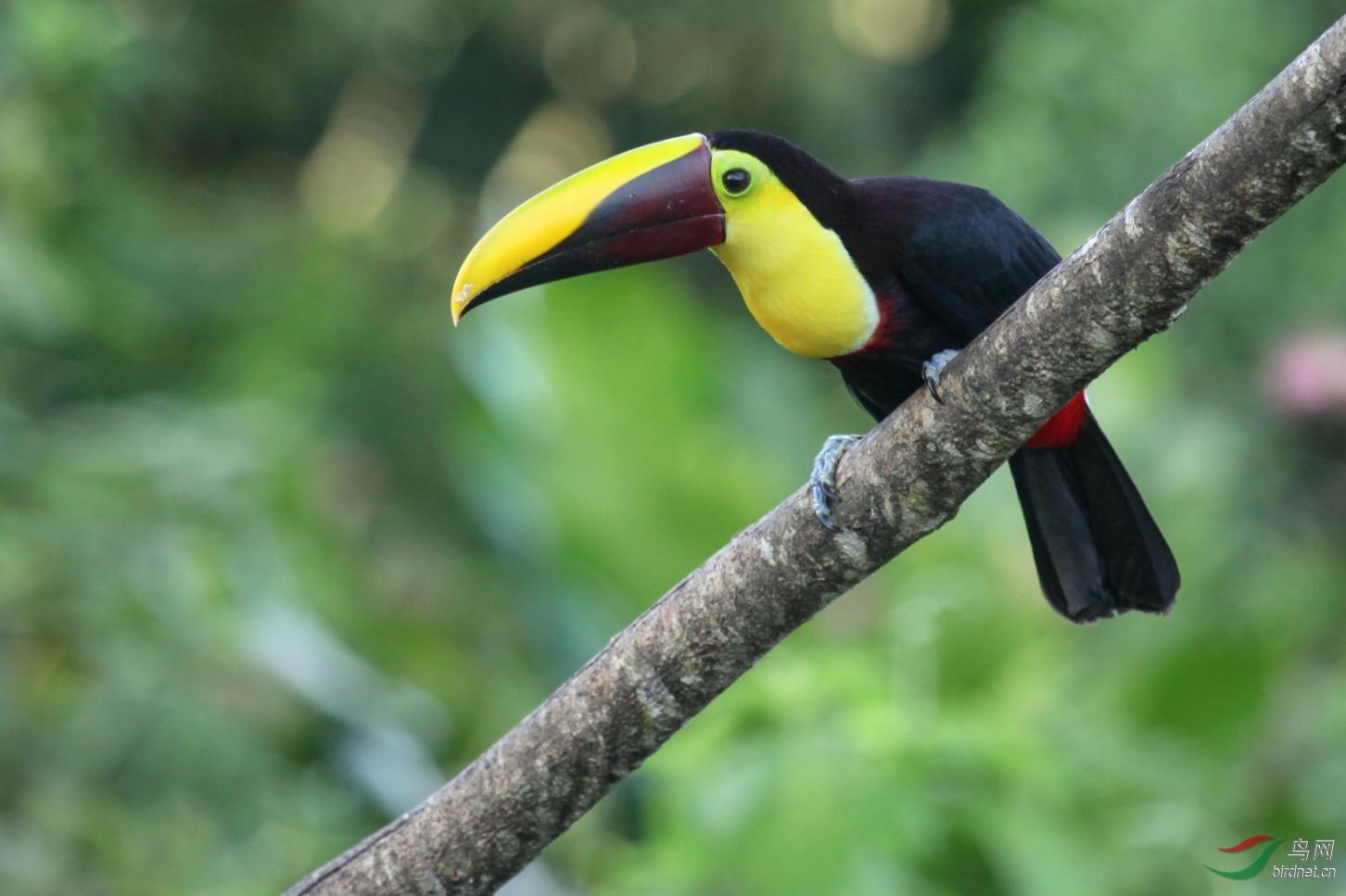 16天哥斯达黎加拍鸟团_页面_04_图像_0001.jpg