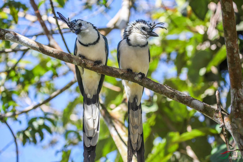 16天哥斯达黎加拍鸟团_页面_06_图像_0001.jpg