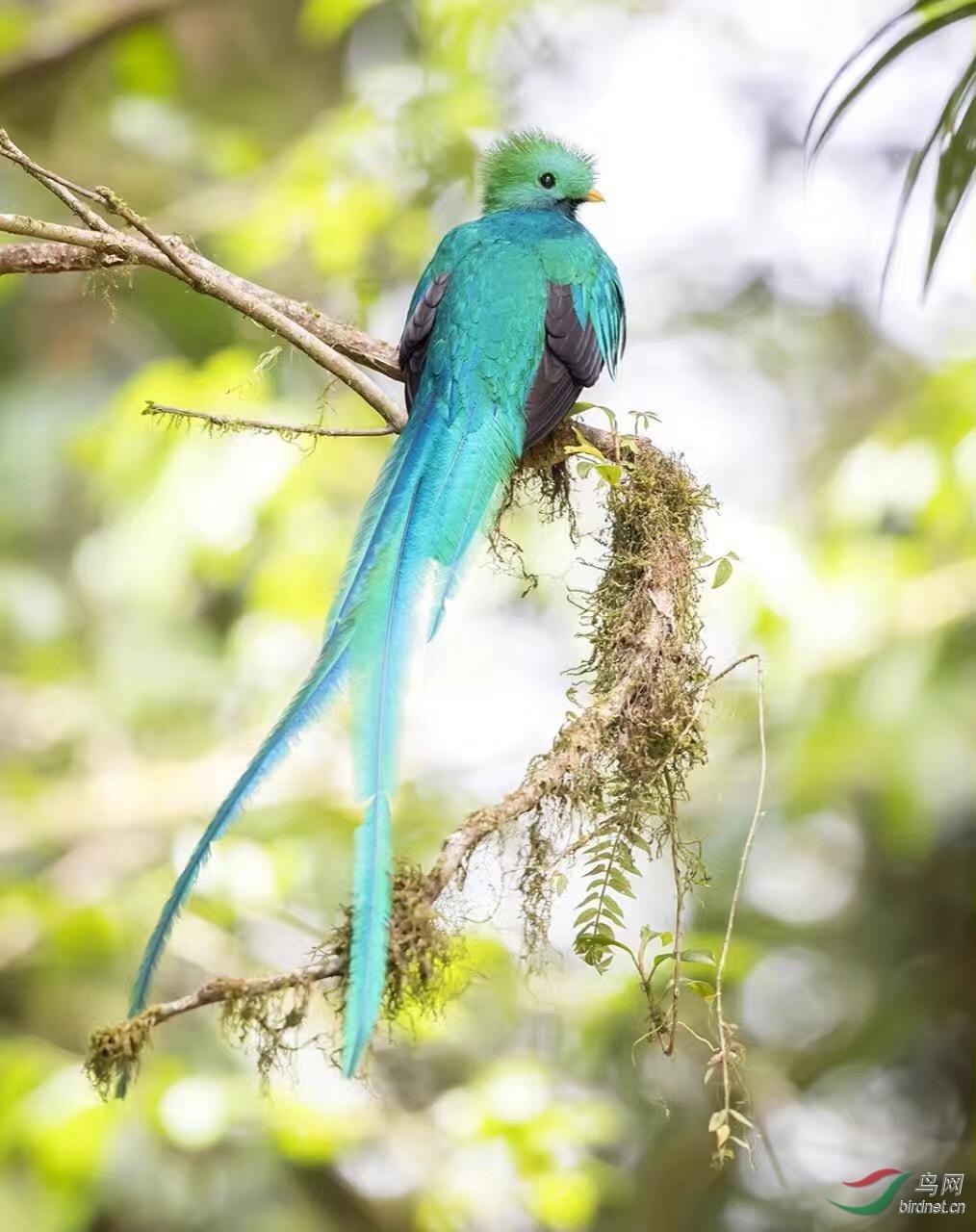 16天哥斯达黎加拍鸟团_页面_54_图像_0001.jpg