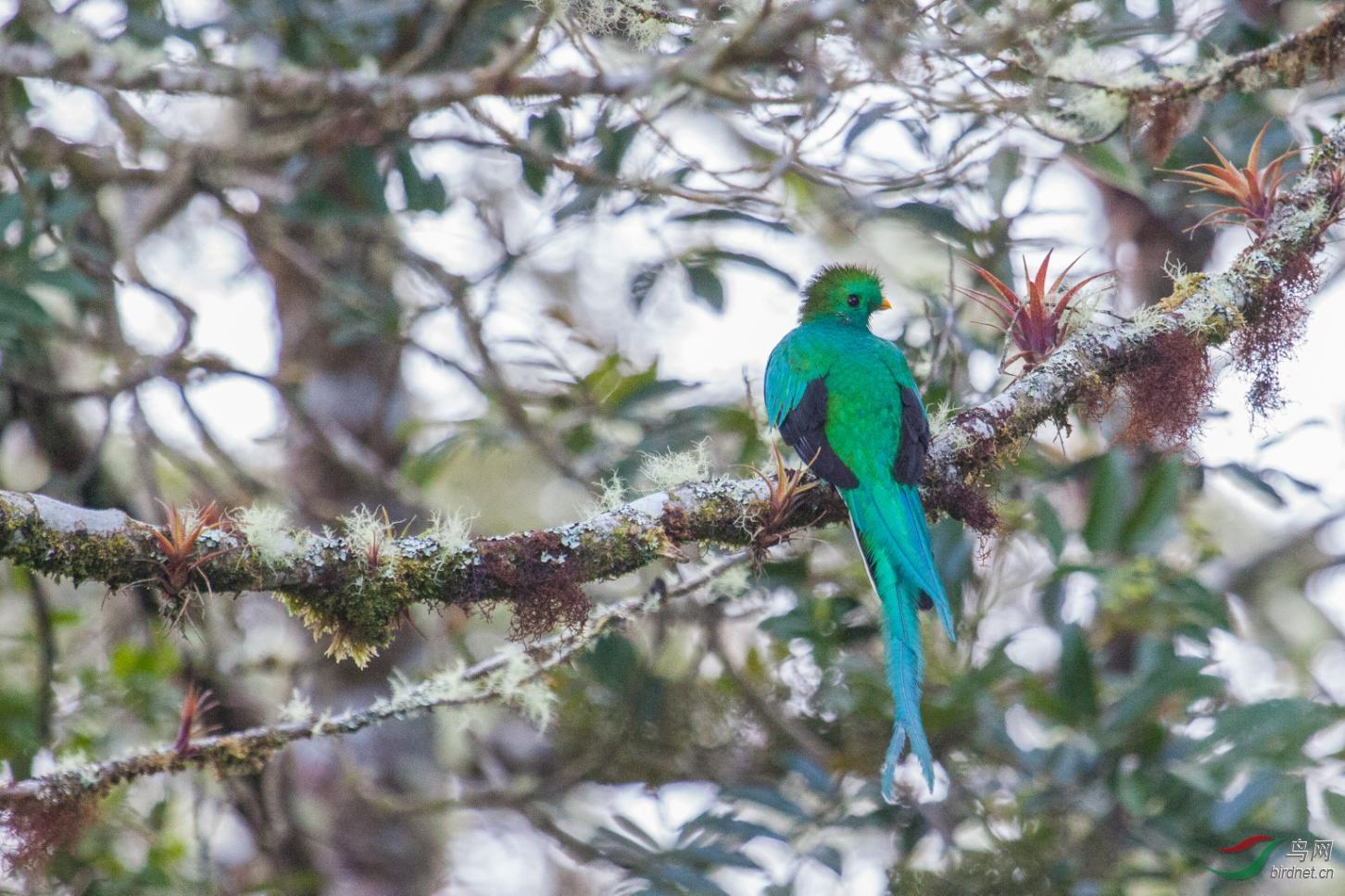 16天哥斯达黎加拍鸟团_页面_61_图像_0002.jpg