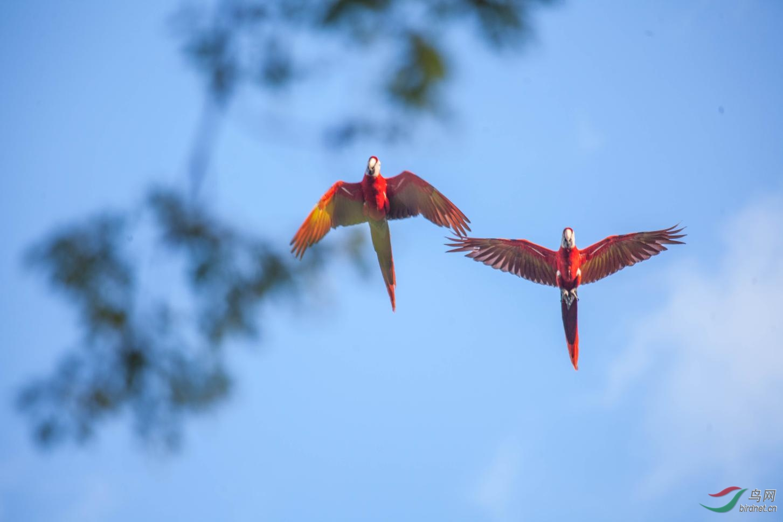16天哥斯达黎加拍鸟团_页面_64_图像_0001.jpg