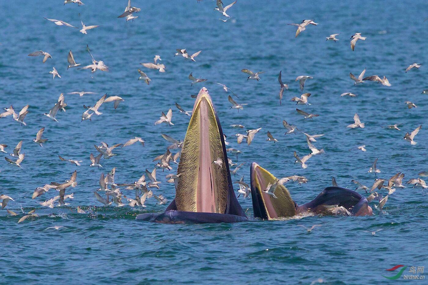 18--《布氏鲸的盛宴 》--王易(曼谷奔驰).jpg