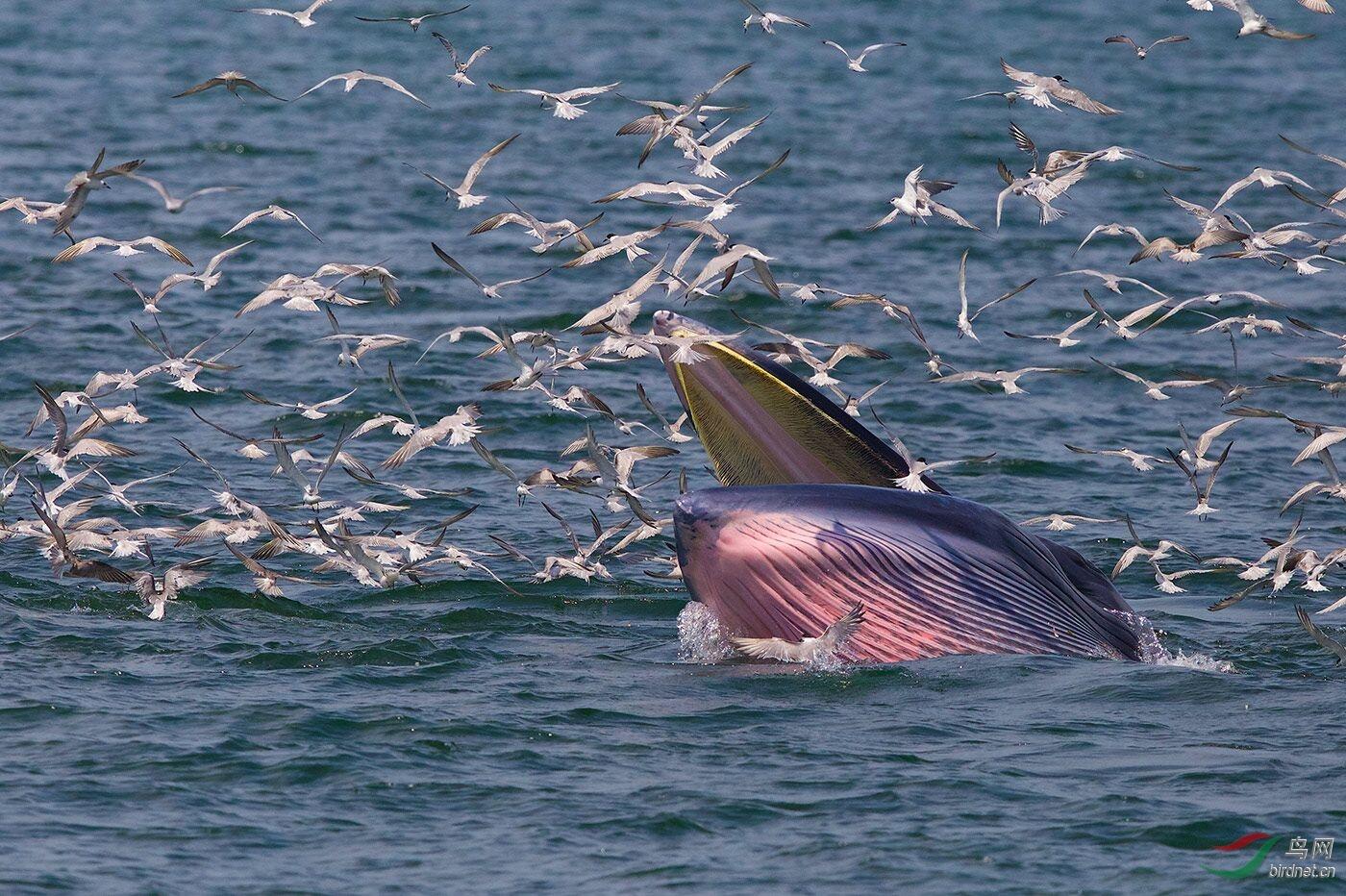 19--《布氏鲸的盛宴 》--王易(曼谷奔驰).jpg