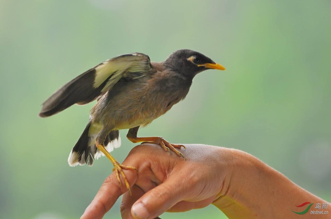 人类与鸟.jpg