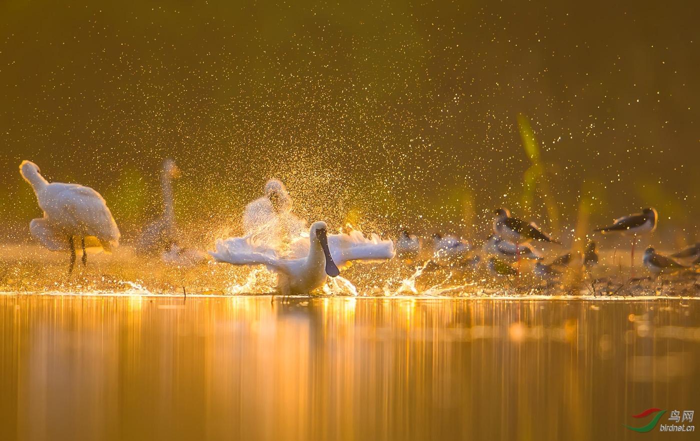 《沐浴阳光》-类别A:自然--星期五.jpg