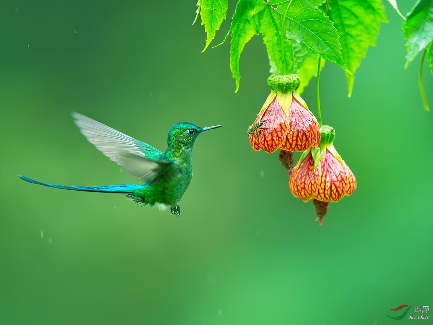 花蜜的诱惑Temptation Of Nectar--郭益民.jpg