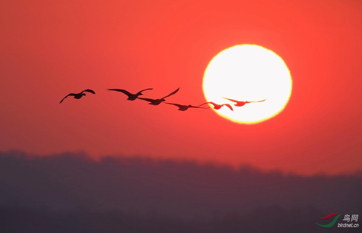 《我们的队伍向太阳》.jpg
