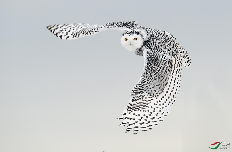 161.  菜鸟学拍鸟.jpg