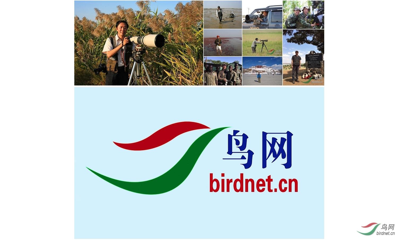 1.鸟网把拍鸟这样一项高尚的科学性的技术性的活动,做成了成功的全国性的事业。