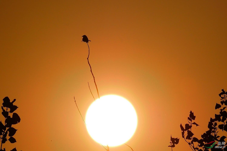2.我以太阳为支点,撬动人类保护地球的智慧。