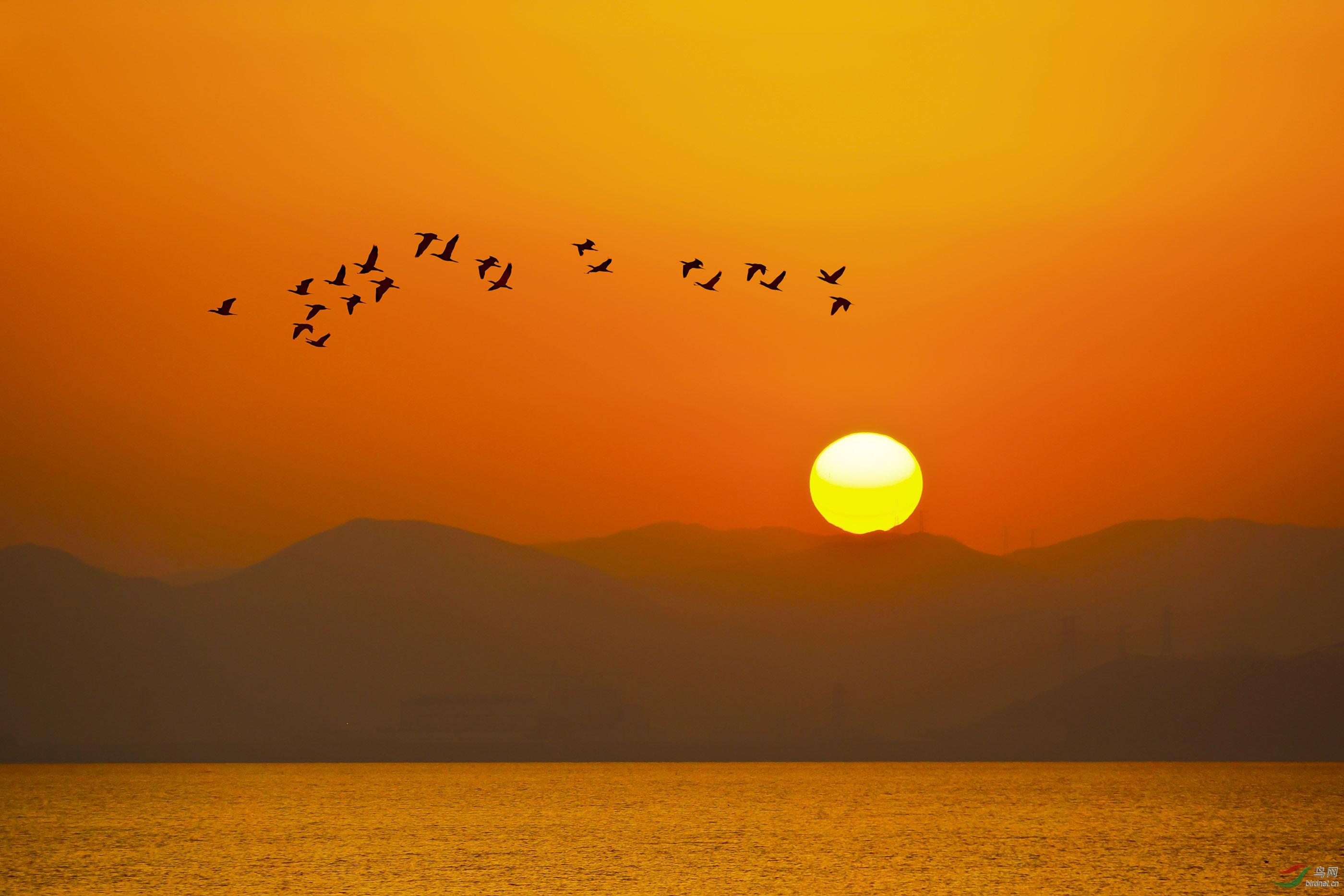 《夕阳红》2.jpg