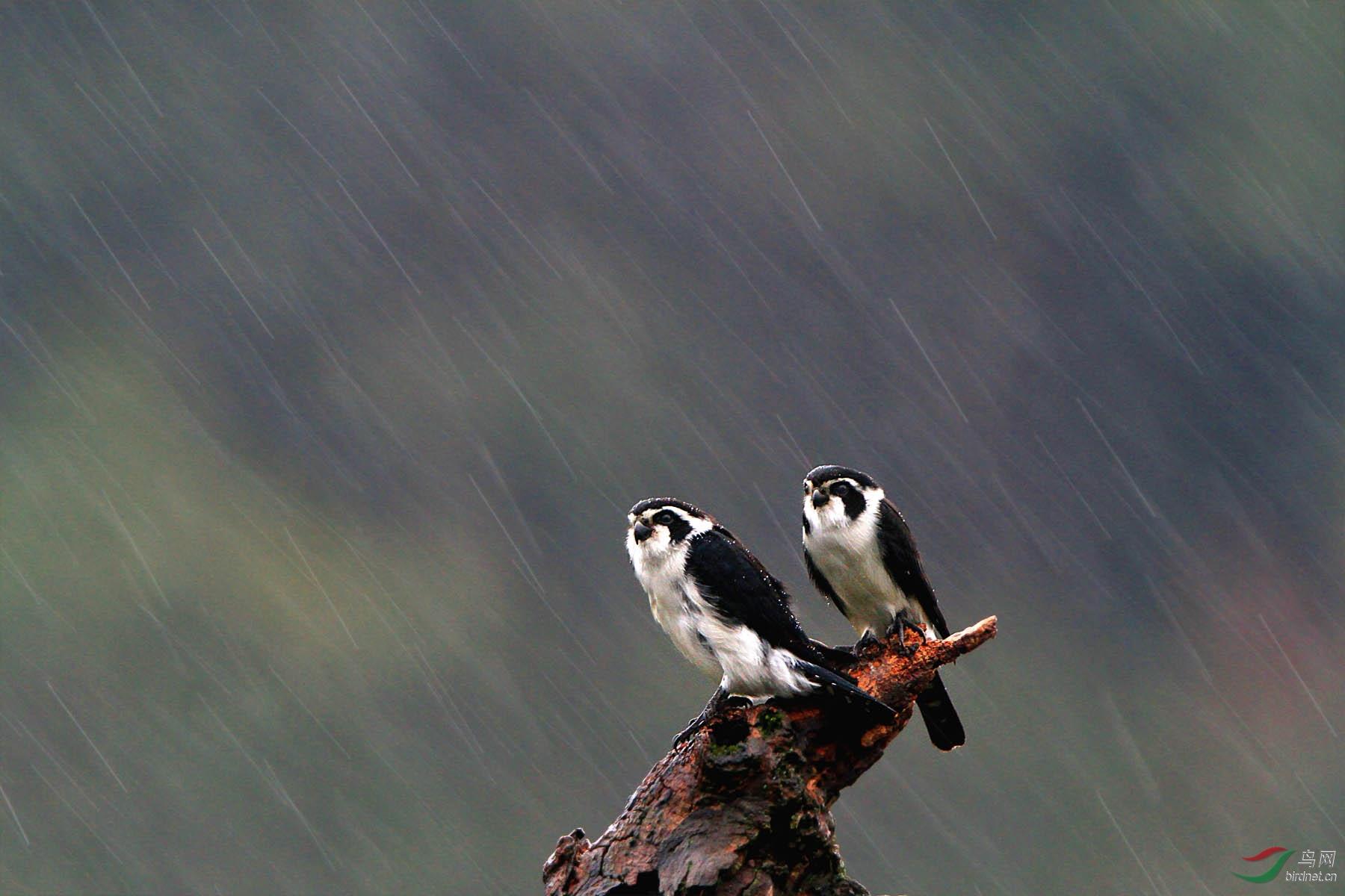 风雨交加.jpg