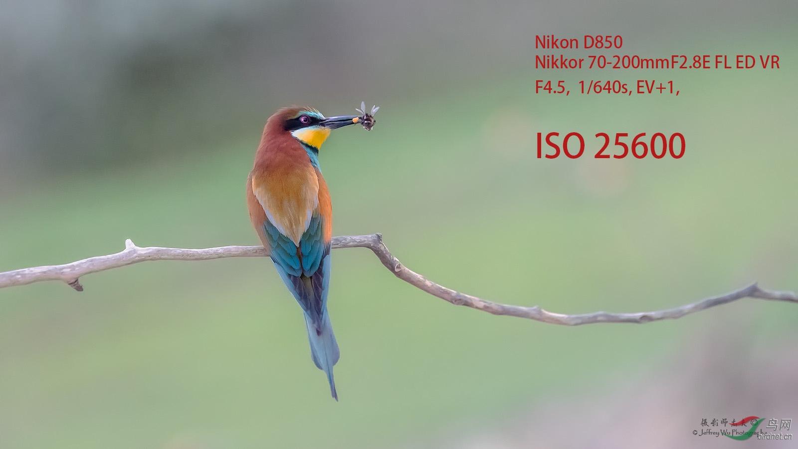 _DSC1949ISO.jpg