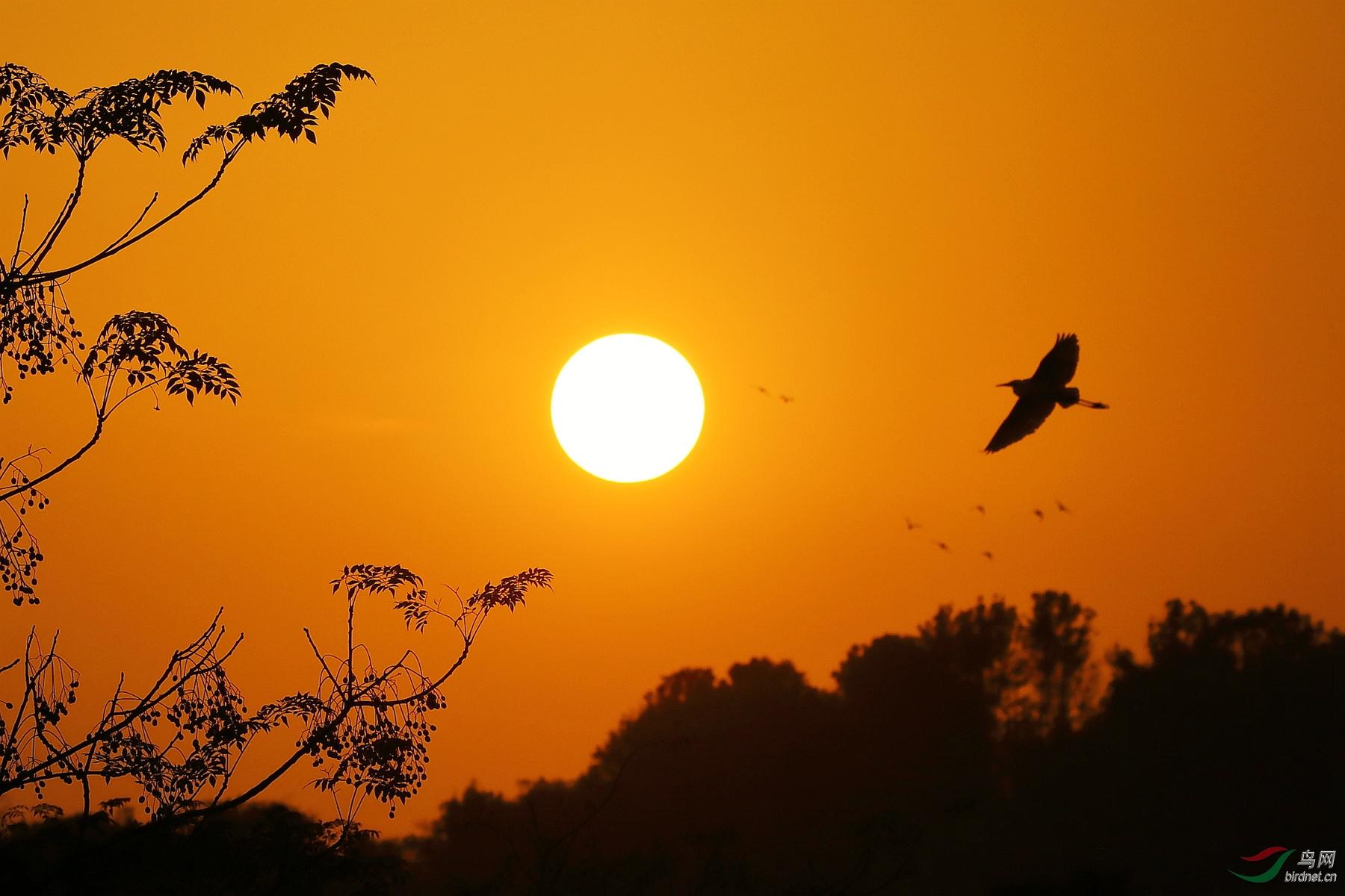 鸟随落日归