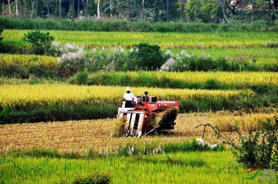 7:2000年前农民收割完稻子全靠人力挑担