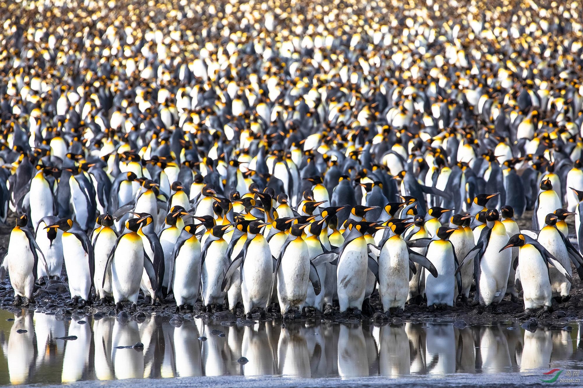 王企鹅-2955.jpg